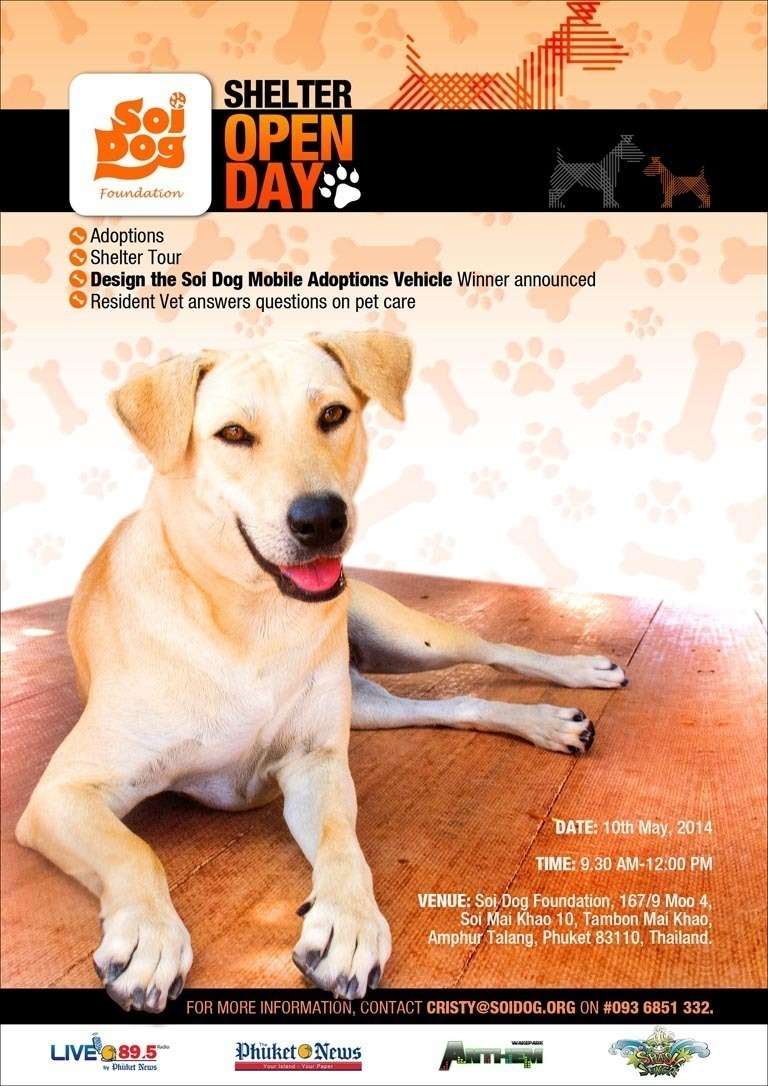 Soi Dog Adoption