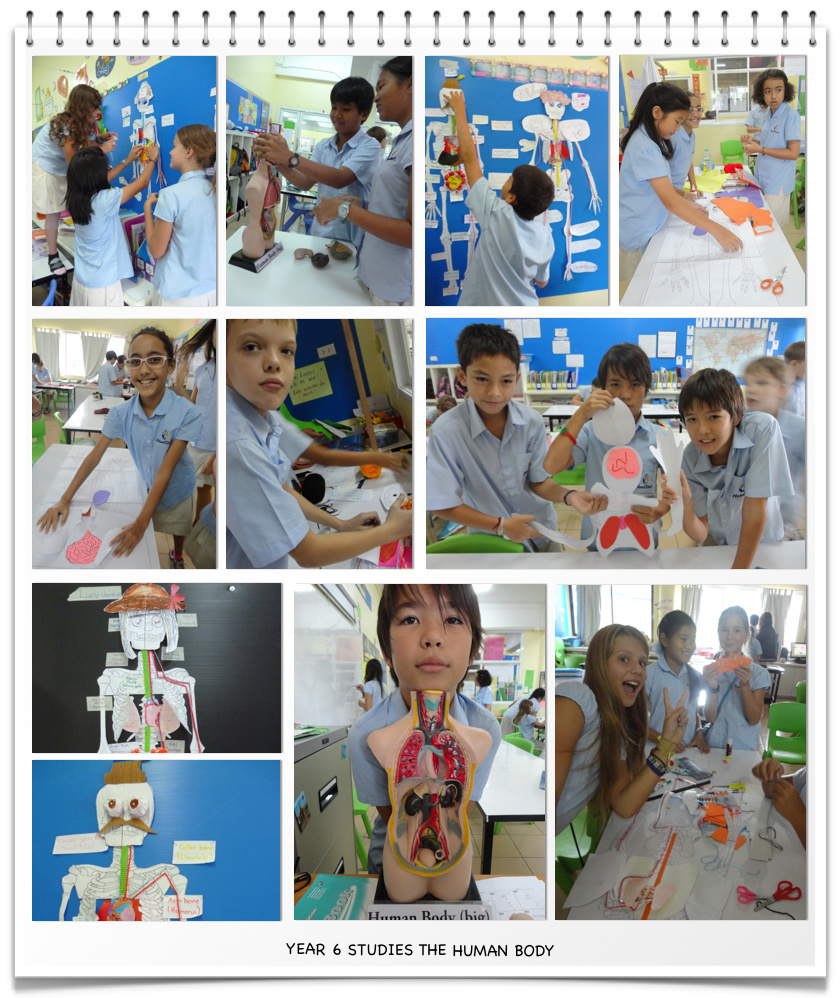Year 6 Studies the Human Body